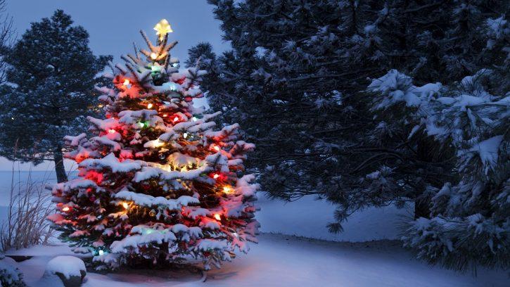 arbol de navidad ingles